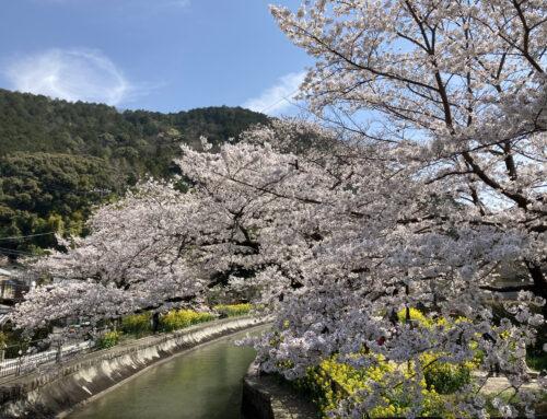 第64回日本形成外科学会総会でそれぞれ発表を行いました
